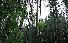 rezervatia Glodeasca