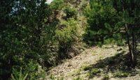 rezervatia naturala Groapa cu Pini