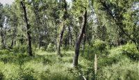 rezervatia naturala Lunca Siretului