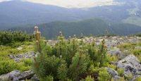 rezervatia naturala Muntele Goru