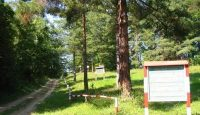 rezervatia naturala Padurea Cenaru