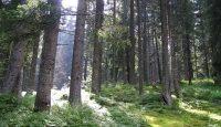rezervatia naturala Padurea Verdele